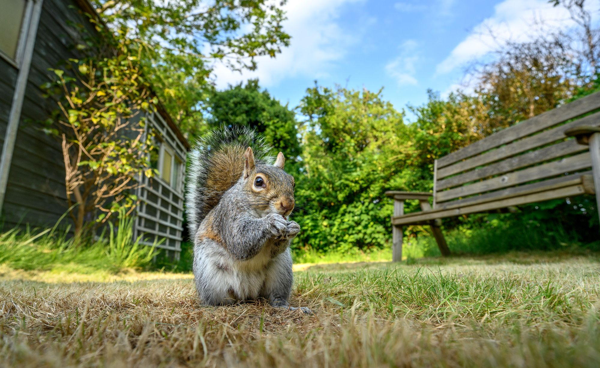 photographing squirrels, urban wildlife photography
