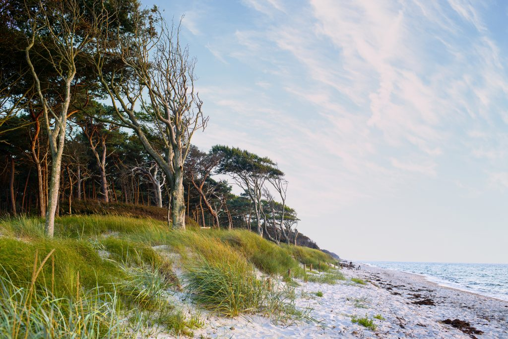 A sandy shoreline meeting a green national park in Darß, a southern shore of the Baltic sea. Photographed by Jürgen Müller.