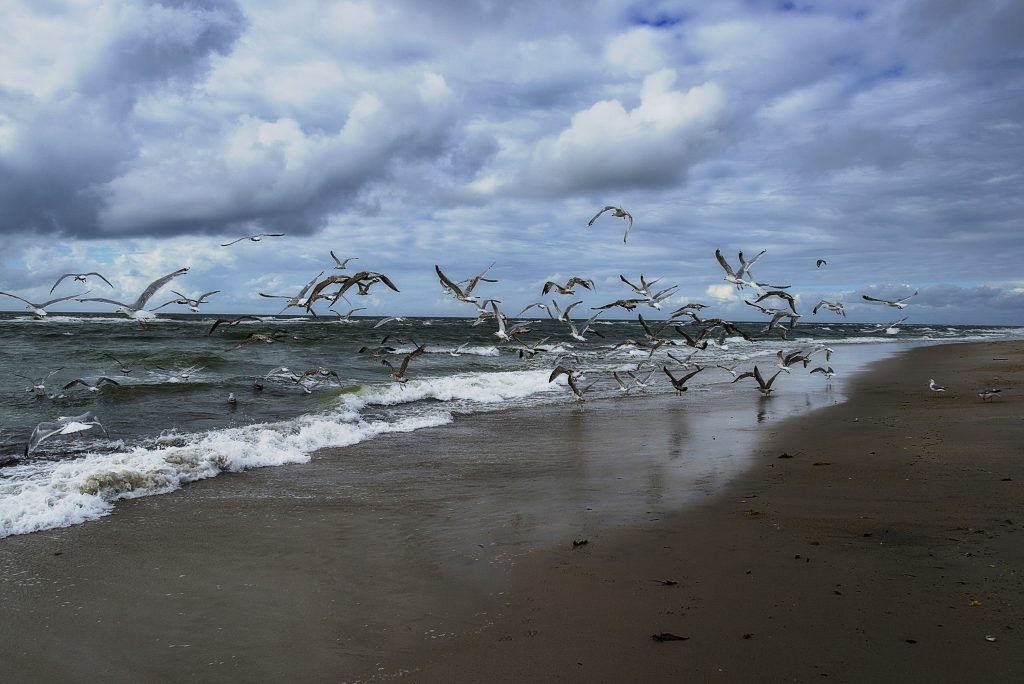 On a stormy day, a flock of birds fly low on the shoreline of Sylt, an island just north of Germany. Photographed by Jürgen Müller.