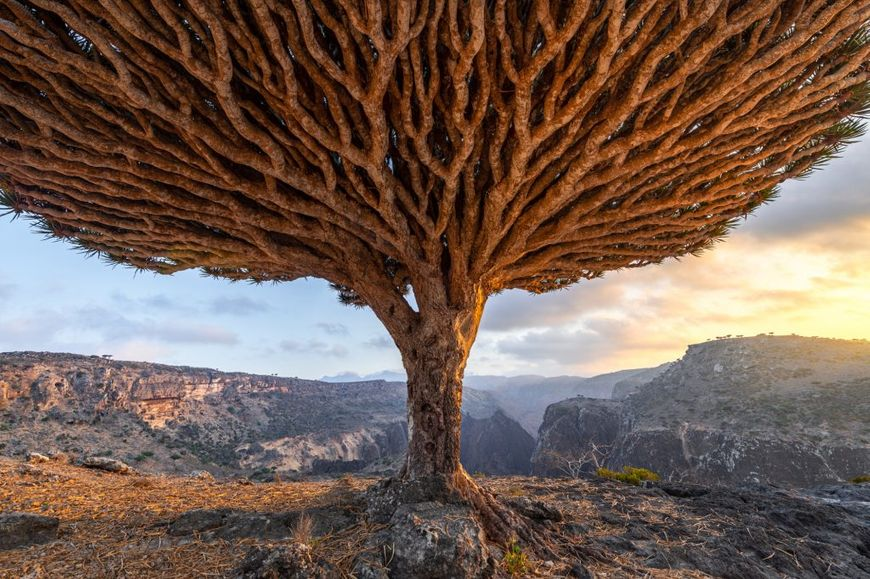 Dragon Blood: Nikon Ambassador Marsel van Oosten's journey to Socotra, Yemen