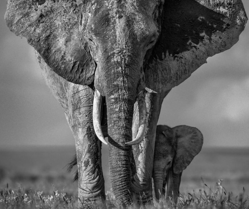 A place close to my heart: David Yarrow profiles the colossal elephants and people that call Kenya home