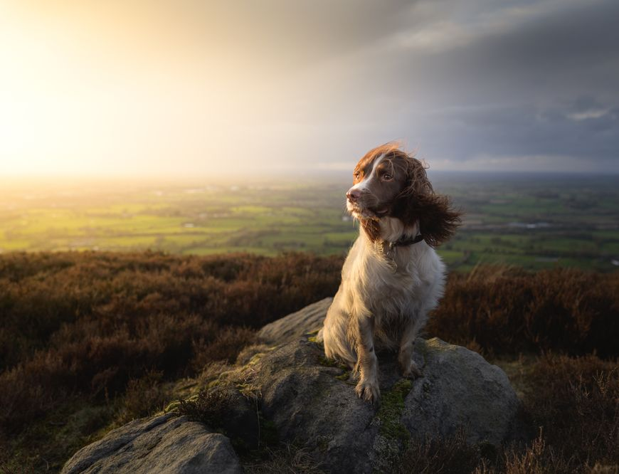 Create Your Light: Pet photography with landscape photographer Nigel Danson & his Springer Spaniel, Pebbles